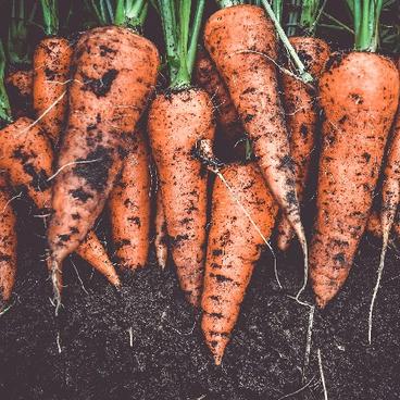 Vores bæredygtige mad
