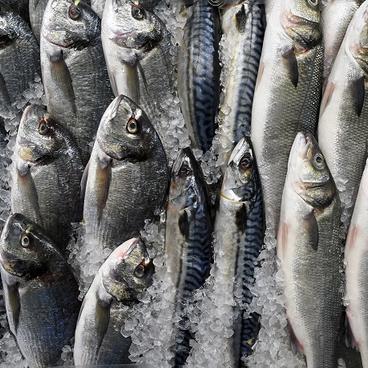 Når det hele går i fisk